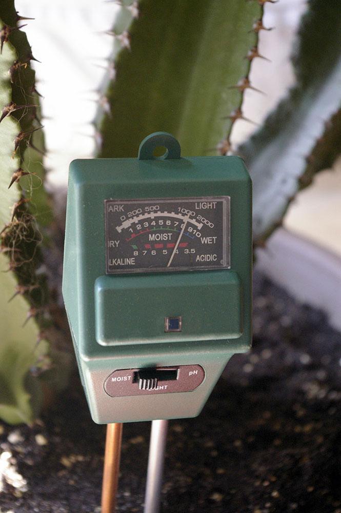 rempotage grand cactus cierge cereus peruvianus. Black Bedroom Furniture Sets. Home Design Ideas